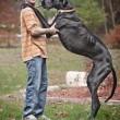Zeus è morto: era il cane più alto del mondo, misurava 112 cm alla spalla01