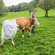 Mucche col pannolone: la protesta tedesca contro la legge Ue sul letame FOTO 3