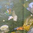 Bimbo si taglia il piede con una lattina nella casa discarica e muore FOTO2