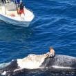 Surf sulla carcassa della balena in Australia FOTO