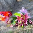 Australia, 8 bambini uccisi a coltellate in casa FOTO: sospetti sulla madre04