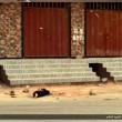 Siria, buttato dal tetto e lapidato. Isis pubblica le foto su Twitter 06