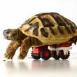 """Tartaruga torna a muoversi grazie alle """"ruote"""" di Lego 02"""