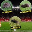 Manchester United, stadio Old Trafford infestato da topi02