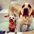 """Pete e Tally, cani """"sposi"""" che condividono tutto"""
