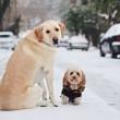 """Pete e Tally, cani """"sposi"""" che condividono tutto04"""