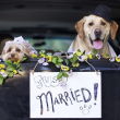"""Pete e Tally, cani """"sposi"""" che condividono tutto11"""