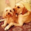 """Pete e Tally, cani """"sposi"""" che condividono tutto10"""