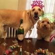 """Pete e Tally, cani """"sposi"""" che condividono tutto08"""