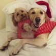"""Pete e Tally, cani """"sposi"""" che condividono tutto07"""