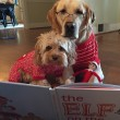 """Pete e Tally, cani """"sposi"""" che condividono tutto06"""