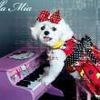 Rose Ann Bolasny esclude figli dal testamento, 1 mln di dollari alla cagnolina 3