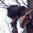 Torino, capriolo scuoiato e impiccato ad albero del liceo Ferraris 2