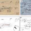 Le immagini dei rover: forse inquadrano fossili su Marte