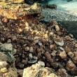 Trapani, ruspa distrugge scogliera San Vito Lo Capo 6