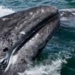 Migrazioni, è l'ora per balene e gnu...si muovono miliardi di animali 4