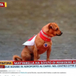 Briciola, il cane mascotte dei carabinieri05