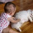Gatti babysitter che accudiscono e fanno compagnia ai bimbi 09