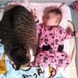 Gatti babysitter che accudiscono e fanno compagnia ai bimbi 03