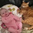 Gatti babysitter che accudiscono e fanno compagnia ai bimbi