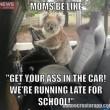 "Australia, koala vuole ""rubare"" auto in sosta10"