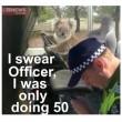 "Australia, koala vuole ""rubare"" auto in sosta08"