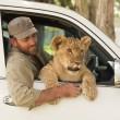 Sydney, guardiano parco naturale insegna a cucciolo di leone a nuotare03