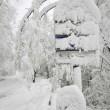 Maltempo: neve al Nord, bora a 150 km/h a Trieste, acqua alta a Venezia FOTO 5