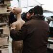 Elena Ceste, test abbandono cadavere fallisce: il manichino non è adatto 01