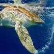 Migrazioni, è l'ora per balene e gnu...si muovono miliardi di animali 7