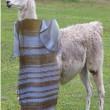 Di che colore è il vestito? Domanda fa impazzire utent 7