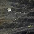 Mistero Germanwings: portellone e depressurizzazione o evento violento a bordo24