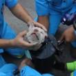 VIDEO YouTube: cane intrappolato nel tubo d'acciaio, 40 minuti per liberarlo02