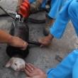 VIDEO YouTube: cane intrappolato nel tubo d'acciaio, 40 minuti per liberarlo