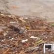 VIDEO YouTube: Cile, cane tra i detriti dell'alluvione si salva per miracolo2