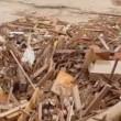 VIDEO YouTube: Cile, cane tra i detriti dell'alluvione si salva per miracolo6