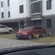 """Cane cacciato dal parcheggio torna con gli """"amici"""" e prende a morsi l'auto FOTO 2"""