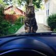 Quando il gatto complotta di ucciderti 03