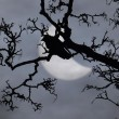 Eclissi di Sole 20 Marzo: FOTO da tutto il mondo