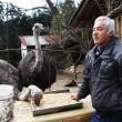 VIDEO YouTube - Fukushima, Naoto Matsumura, guardiano degli animali abbandonati 10