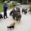 VIDEO YouTube - Fukushima, Naoto Matsumura, guardiano degli animali abbandonati 2