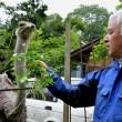 VIDEO YouTube - Fukushima, Naoto Matsumura, guardiano degli animali abbandonati 8