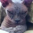 Quando il gatto complotta di ucciderti 13