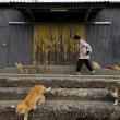 Aoshima isola dei gatti: per ogni umano ci sono 6 felini