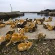 Aoshima isola dei gatti: per ogni umano ci sono 6 felini 10