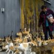 Aoshima isola dei gatti: per ogni umano ci sono 6 felini 11