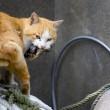 Aoshima isola dei gatti: per ogni umano ci sono 6 felini 12