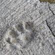 Aoshima isola dei gatti: per ogni umano ci sono 6 felini 4