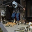 Aoshima isola dei gatti: per ogni umano ci sono 6 felini 18