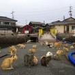 Aoshima isola dei gatti: per ogni umano ci sono 6 felini 02